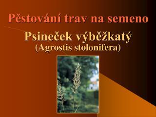 P?stov�n� trav na semeno