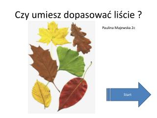Czy umiesz dopasować liście ?