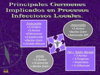 Endocarditis S.Viridans S.Aureus Enterococos S.Epidermidis Bacilos Gram- Cándida Albicans