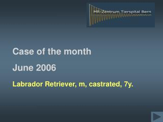 Labrador Retriever, m, castrated, 7y.