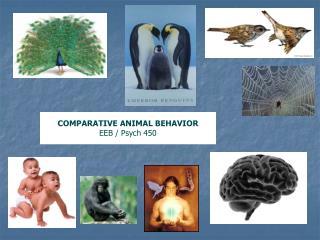 COMPARATIVE ANIMAL BEHAVIOR EEB / Psych 450