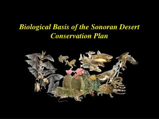 Biological Basis of the Sonoran Desert Conservation Plan