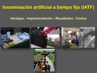 Inseminación artificial a tiempo fijo (IATF) Ventajas – Implementación – Resultados - Costos
