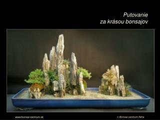 Poďte s nami  na malé putovanie za krásou bonsajov.  Sú to stromy plné života a sily,