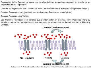 Canales no Regulables. Son Canales de iones  permanentemente abiertos ( non-gated channels )