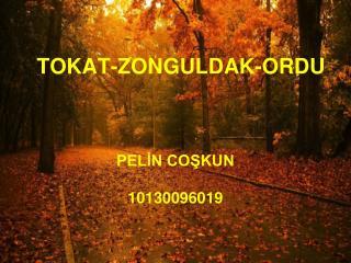 TOKAT-ZONGULDAK-ORDU