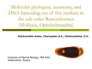 Chichvarkhin Anton, Chernyshev A.V., Chichvarkhina. O.V.