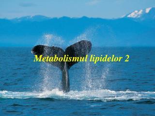 Metabolismul lipidelor 2