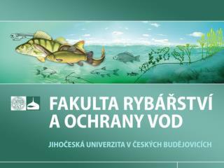 DÚ III.1 – Produkce znečištění rybami v závislosti na druhu a množství předkládaného krmiva