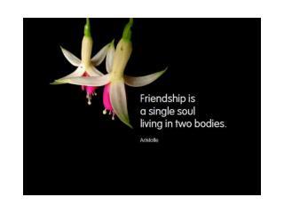 y-friendship