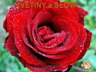 KVĚTINY a SLOVA