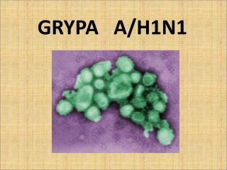 GRYPA   A/H1N1