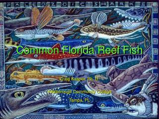 Common Florida Reef Fish