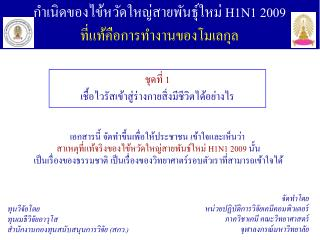 กำเนิดของไข้หวัดใหญ่สายพันธุ์ใหม่  H1N1 2009 ที่แท้คือการทำงานของโมเลกุล
