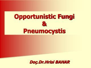 Opportunistic Fung i & Pneumocystis