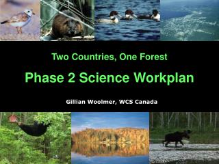 Two Countries, One Forest Phase 2 Science Workplan