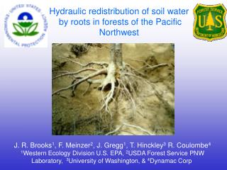 Hydraulic redistribution of soil water  by roots in forests of the Pacific Northwest