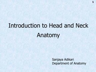 Introduction to Head and Neck Anatomy
