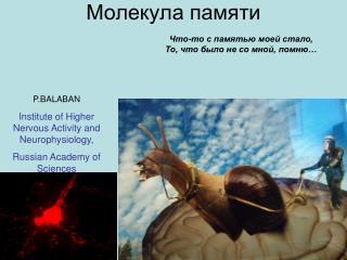 Молекула памяти