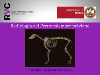 Radiolog�a del Perro: miembro pelviano