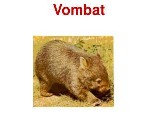 Vombat