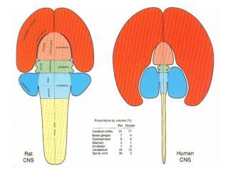 Modelo membrana