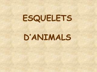 ESQUELETS D�ANIMALS