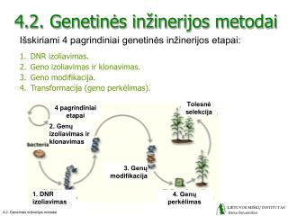 4.2. Genetinės inžinerijos metodai