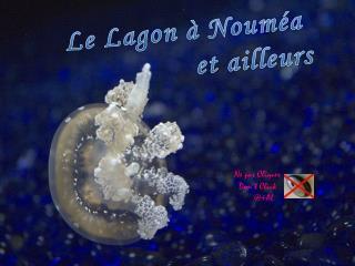 Le  Lagon  à  Nouméa et  ailleurs