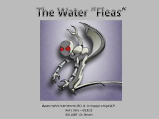 Bythotrephes cederstroemi (BC)  &  Cercopagis pengoi (CP) Neil J. Elms – 4/13/11