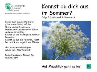 Klicke Dich durch 100 Blüten- pflanzen im Wald, auf der Wiese und an Gewässern.