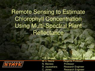 Remote Sensing to Estimate Chlorophyll Concentration Using Multi-Spectral Plant Reflectance
