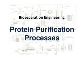 Protein Purification Processes