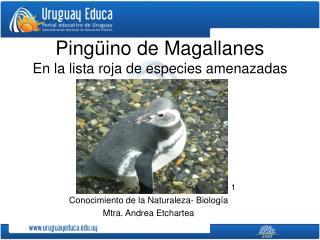Pingüino de Magallanes En la lista roja de especies amenazadas