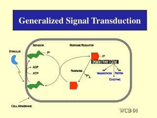 Generalized Signal Transduction