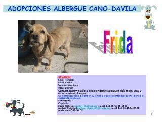 ADOPCIONES ALBERGUE CANO-DAVILA