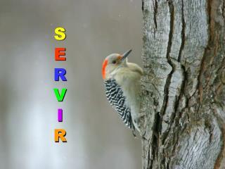 S E R V I R