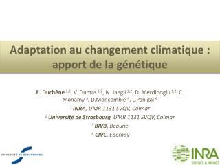 Adaptation au  changement climatique  :  apport  de la  génétique