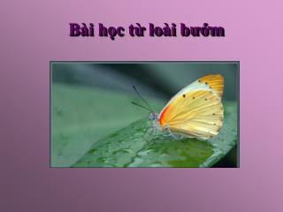 Bài học từ loài bướm