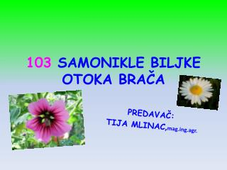 103  SAMONIKLE BILJKE OTOKA BRAČA