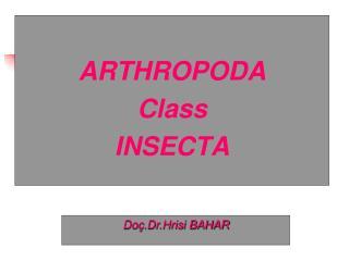 ARTHROPODA Class INSECTA