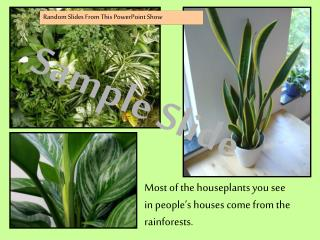 Most of the houseplants you see in people's houses come from the rainforests.