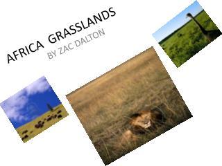 AFRICA  GRASSLANDS
