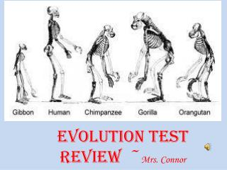 Evolution Test Review  ~ Mrs. Connor