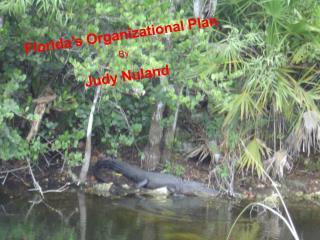 Florida's Organizational Plan By Judy Nuland