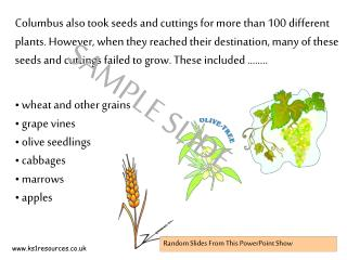 wheat and other grains  grape vines  olive seedlings  cabbages  marrows  apples