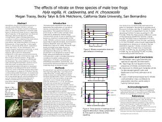 The effects of nitrate on three species of male tree frogs