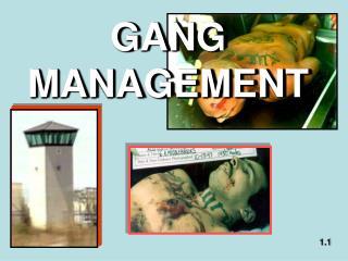 GANG MANAGEMENT