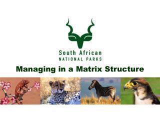 Managing in a Matrix Structure