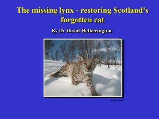 The missing lynx - restoring Scotland's  forgotten cat